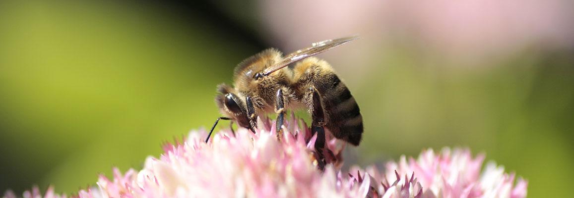 Is Honey Vegan? 3 Satisfyingly Sinful Alternatives 7