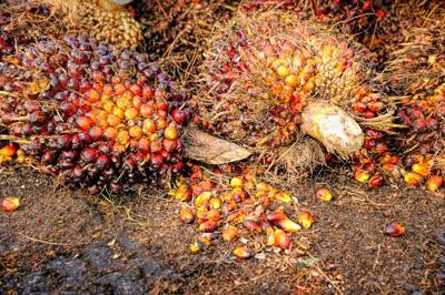 Is Palm Oil Vegan? 3