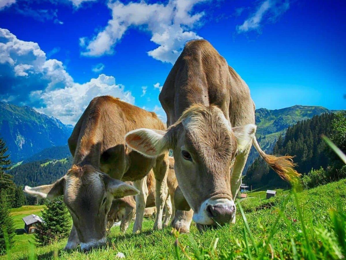 Vegan Articles 2